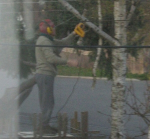 David working on some high pruning.