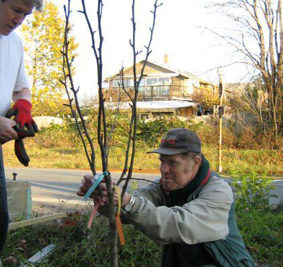 Providing direction and encouragement in the planting of an asian pear.